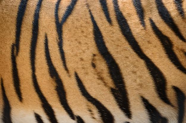 Tiger skin texture background