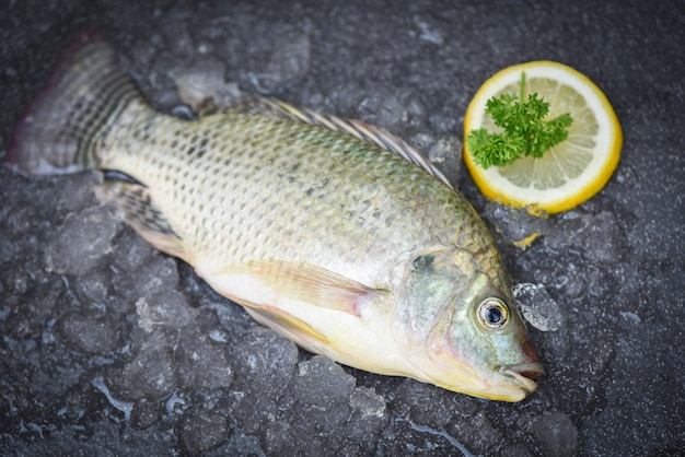 Tilapia fish with lemon slice on ice