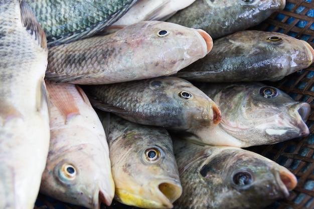 タイの新鮮な市場に送るための農場でティラピアの魚