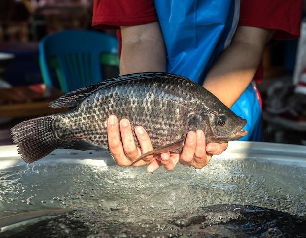Tilapia at market