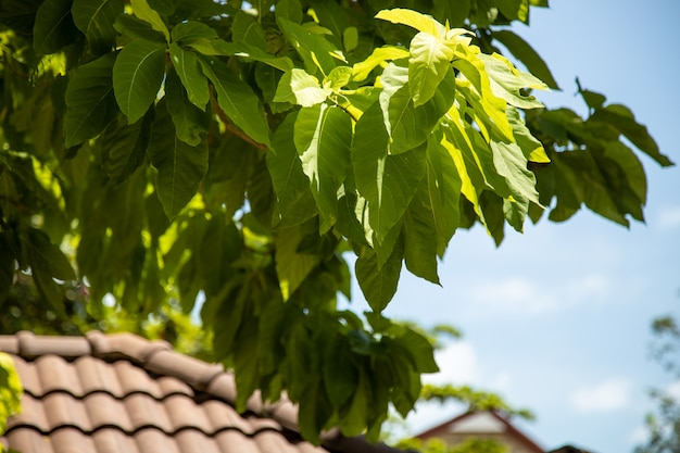 밝은 태양 광선에 기와 지붕과 열대 나무의 잎..