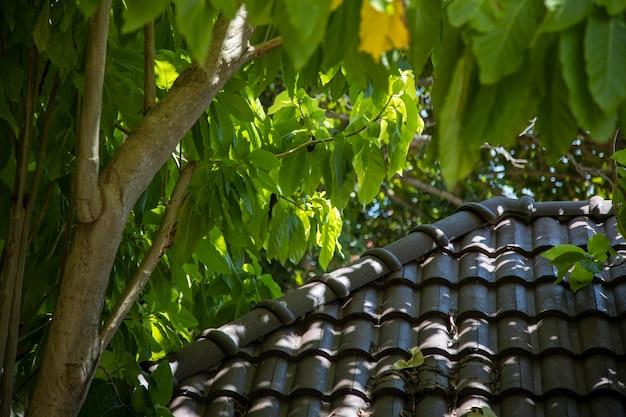 밝은 태양 광선에 기와 지붕과 열대 나무..
