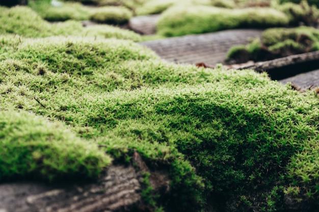 이끼로 덮인 기와 지붕 돌은 아름다운 이끼와 이끼 밝은 녹색 이끼로 덮여 있습니다.