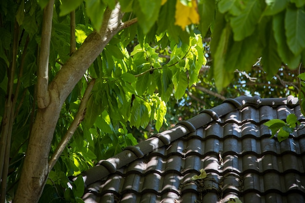 Tiled roof and tropical tree in the rays of the bright sun..