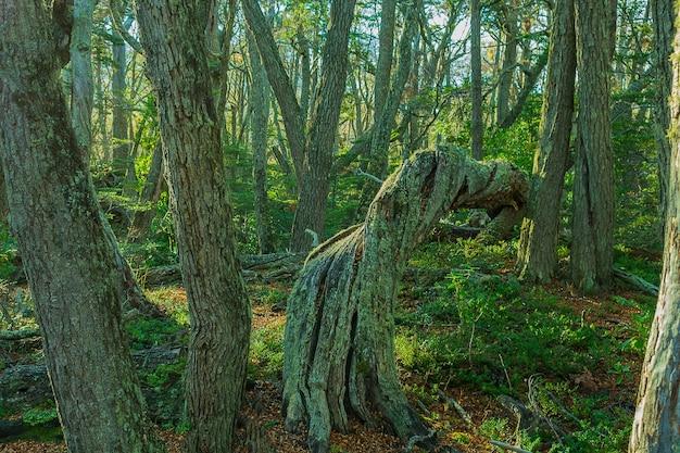 낮 동안 숲에서 기울어 진 된 나무