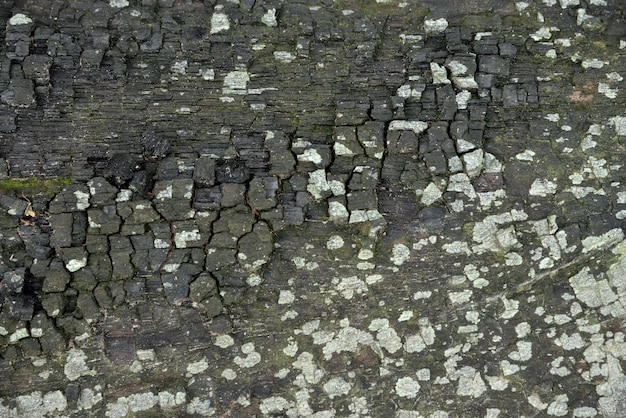 Timber char texture and background