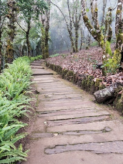 Timber pathway along the hill.
