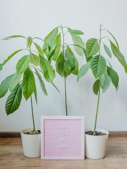 Время быть счастливым мотивационная надпись на фоне домашних растений авокадо в горшках