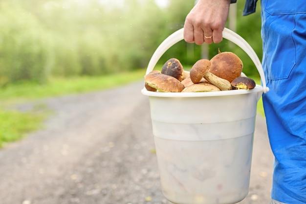 버섯을 수집할 시간입니다. 햇빛이 있는 가을 숲에서 버섯의 흰색 양동이를 가진 남자.