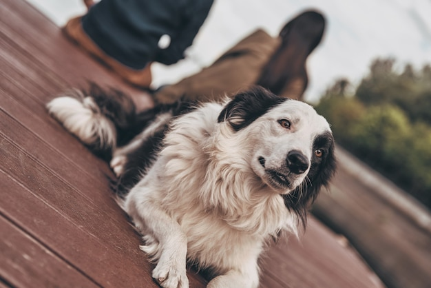Время отдохнуть. милая собака лежит на деревянной платформе у озера, а его хозяева сидят на заднем плане