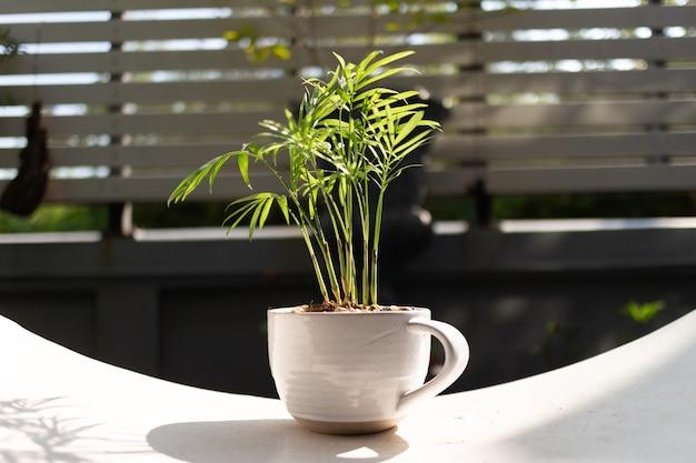 家の設計のための小さな装飾された植物