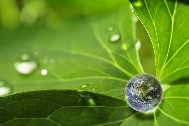 葉の上の小さな地球
