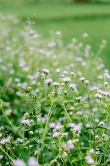 Tiny flower in field
