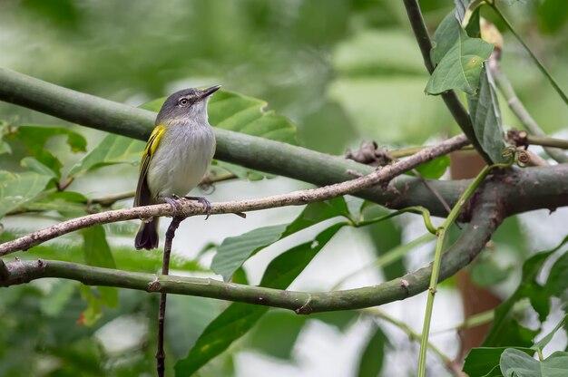 작은 가지에서 먹이를 찾는 작은 새