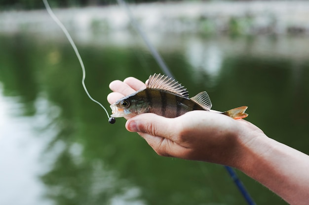 Tiny fresh caught fish in hand against lake