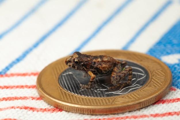 コインの上の小さなカエル