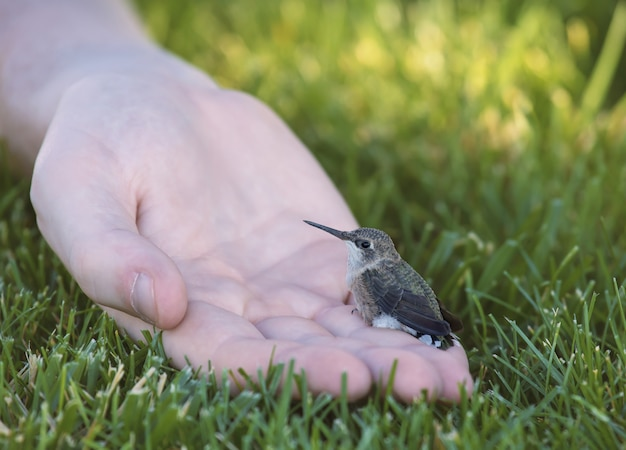 Tiny hummingbird sitting on a human hand surrounded by grass under sunlight