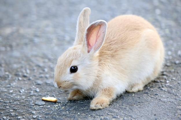 Крошечный светло-коричневый кролик