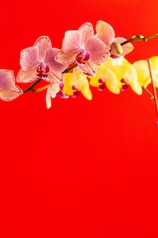 Tiny orchid flowers on red wall