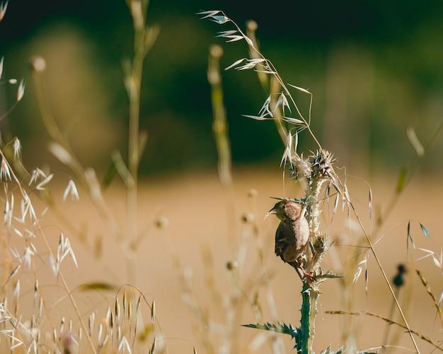 Piccolo passero in piedi sull'erba in un campo sotto la luce del sole