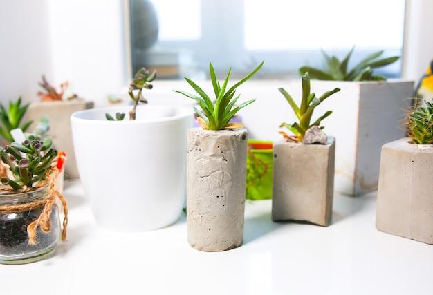 窓の天井のコンクリート植物ホルダーの小さな多肉植物。さまざまな形の手作りの花瓶に小さなサボテンと苔。スタイリッシュで環境にやさしいプランター。