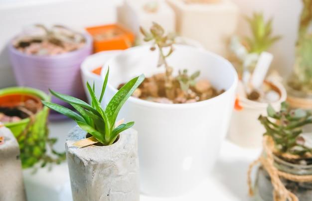 窓の天井のコンクリート植物ホルダーの小さな多肉植物。さまざまな形の手作りの花瓶に収められた小さなサボテンと苔。スタイリッシュで環境にやさしいプランター。
