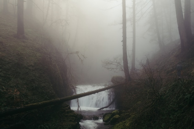 A tiny waterfall in a creepy dark forest