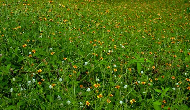 공원에서 얕은 초점에 작은 노란색 꽃.