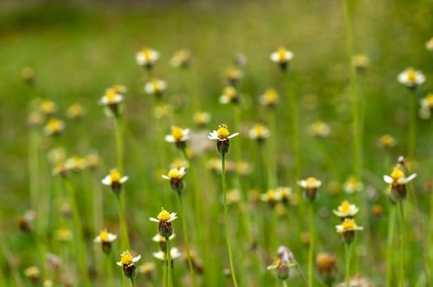 초원에 있는 작은 노란 꽃, 선택된 초점