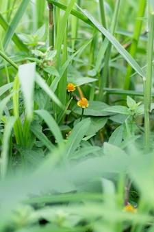 정글의 작은 노란색 야생화