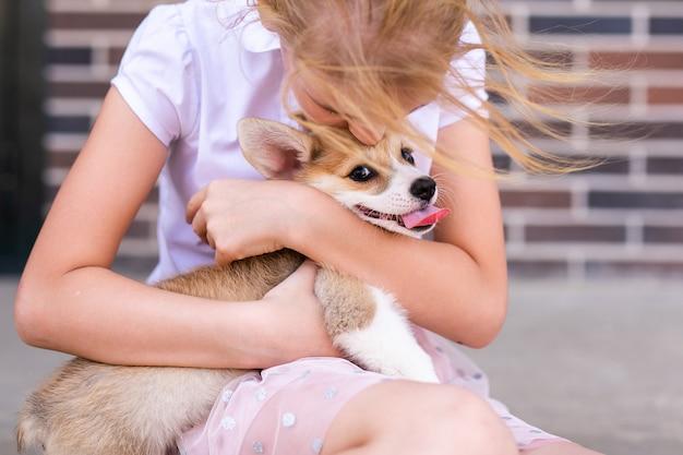Усталый щенок вельш корги пемброка лежит на ноге хозяина.