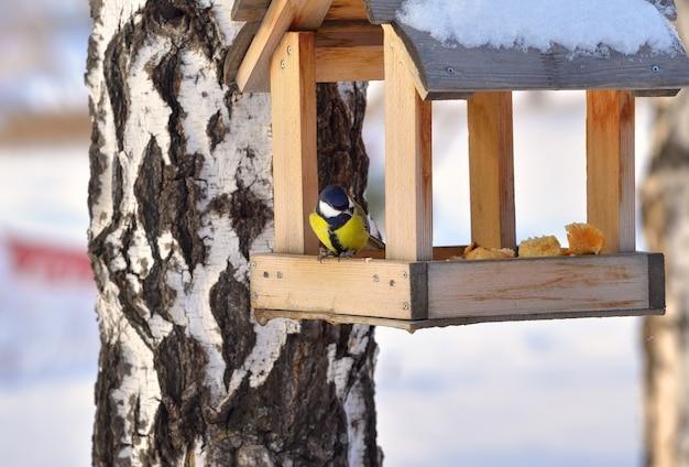 겨울에 모이통에 짹짹 작은 새가 빵과 함께 집 가장자리에 앉는다
