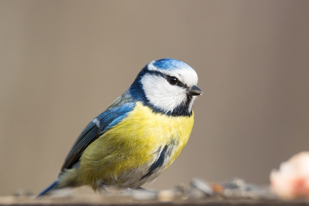 Tit bird on a branch
