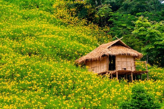 Tithonia diversifolia. bua tong yellow flower at doi hua mae kham in chiang rai, thailand.