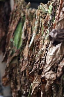 Tobaco leaf drying processing