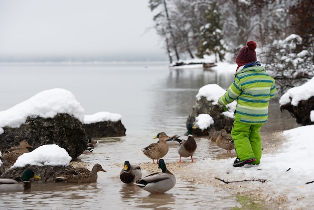Toddler child in green winter suit feeding the ducks in a lake
