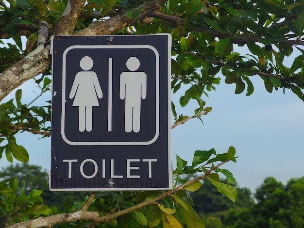 Toilet sign board hanging on green leaves tree at the public outdoor park.