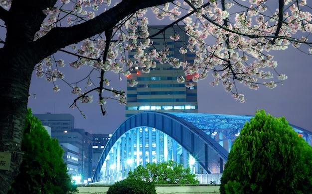 도쿄 봄 풍경