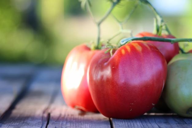 屋外のテーブルのトマトの枝