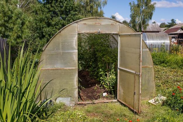 Саженцы помидоров, растущие в теплице. теплица для помидоров в саду.