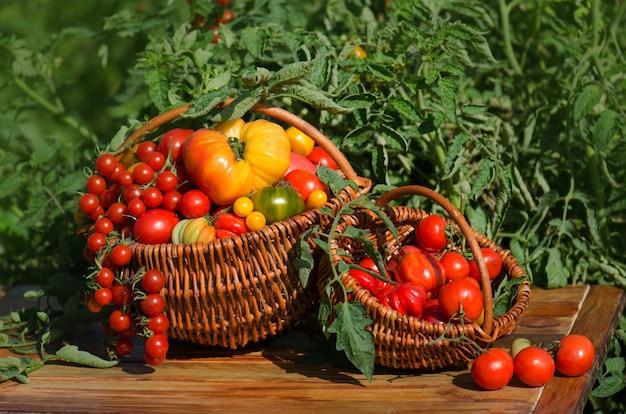 かごの中のトマト。かごの中の赤いトマト。