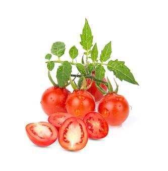 토마토 흰색 배경에 고립