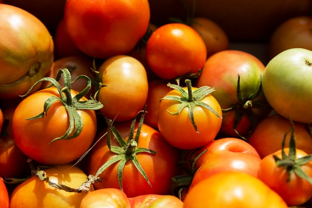 화창한 여름날 상자에 다른 익은 토마토. 수확의 계절. 자연에서 온 건강식.