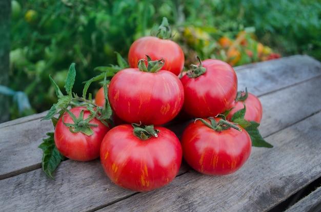 木製のテーブルの上のトマト。木製のテーブルの上の新鮮なトマトの山。天然物のコンセプト。マクロ食品の背景。バークレータイダイピンクトマト