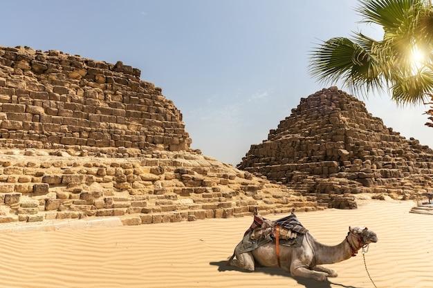 ギザの墓とその隣のラクダ、エジプト。