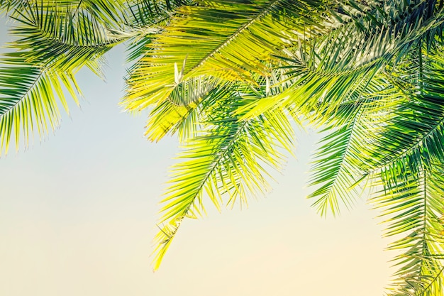 Toned sunlight palm leaves background with copy space