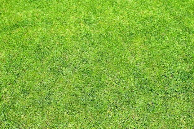 Газон tonsure с крупным планом зеленой травы как фон