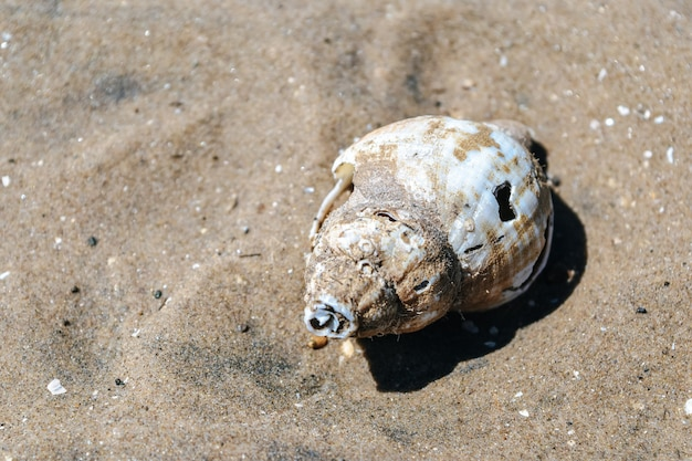 Too view of broken shell on beach