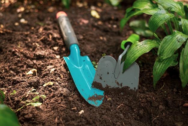ガーデニングのためのツール。シャベルと緑の植物が付いている土 Premium写真