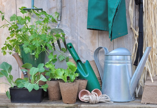 Tools and gardening accessories with seedlings on wooden background